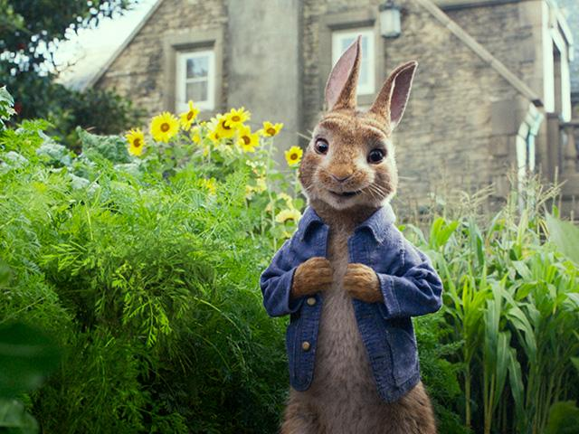 Peter Rabbit movie, Courtesy: Sony Pictures