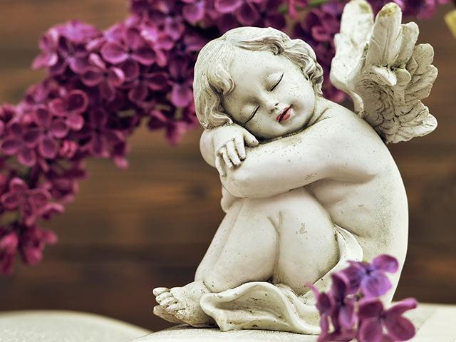 sleeping-angel-flower_si.jpg