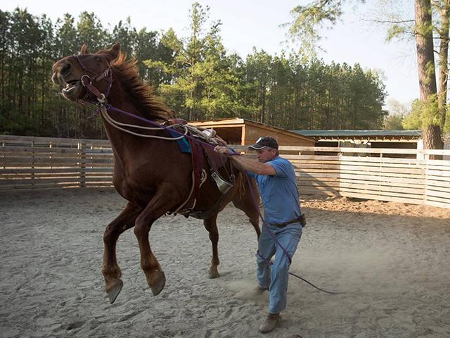 Smokey the wild horse